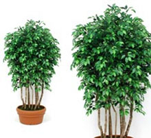 artificial plant Ficus forest green 200 cm