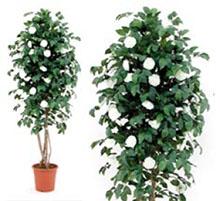 Artificial plant camelia cm 175