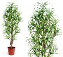 Artificial plant dracena cm 175