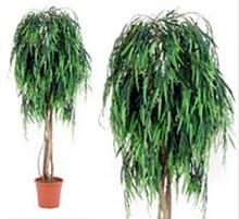 Artificial plant salice cm 175