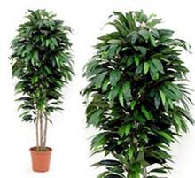 Artificial Plant mango cm 175