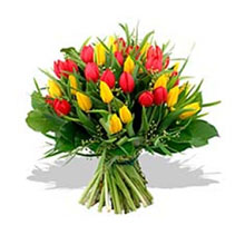 Aliflora Tulipani